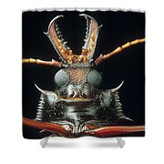 Longhorn Beetle Macrodontia Cervicornis Shower Curtain