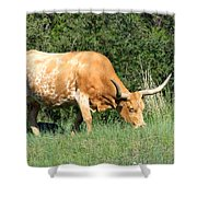 Longhorn Cow Shower Curtain
