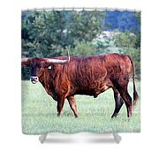 Longhorn Of Texas Shower Curtain