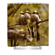 Longtailed Tit Fledglings Shower Curtain