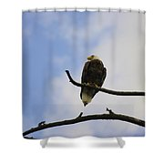 Look Up At The Eagles Shower Curtain