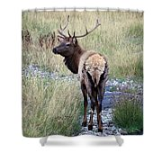 Looking Back Bull Shower Curtain