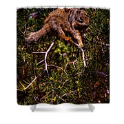 Looking For Nuts Shower Curtain