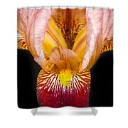 Looking Inside Shower Curtain