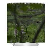 Looking Through The Trees Shower Curtain