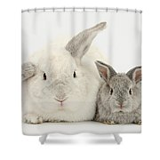 Lop Rabbits Shower Curtain