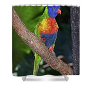 Lorikeet Shower Curtain