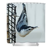 Lost Food Shower Curtain