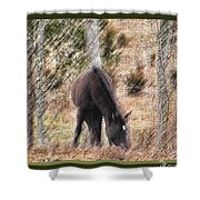Lost In The Woods Shower Curtain