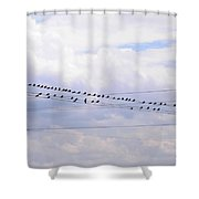 Lots Of Birds On Wires Shower Curtain