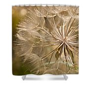 Lots Of Wishes Shower Curtain