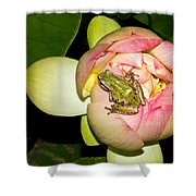 Lotus And Frog Shower Curtain