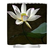 Lotus Beauty Shower Curtain