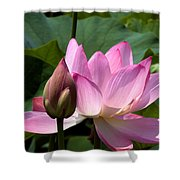 Lotus Bud--here Is How You Do It Dl065 Shower Curtain
