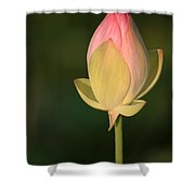 Lotus Bud Shower Curtain