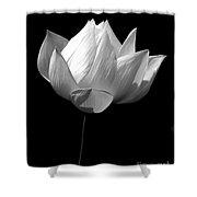 Lotus Bw Shower Curtain