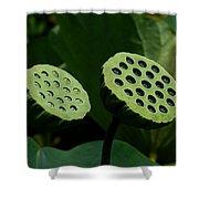 Lotus Capsules-sun Worshipers Dl052 Shower Curtain
