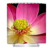 Lotus Close Up Shower Curtain