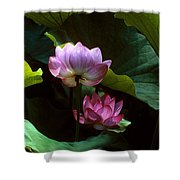 Lotus--dimensions 20h Shower Curtain