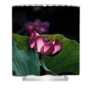 Lotus--echoes Of Light 24h Shower Curtain