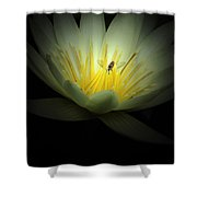 Lotus Blossom And Bee Shower Curtain
