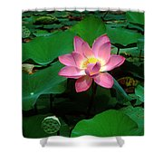 Lotus Flower And Capsule 24a Shower Curtain