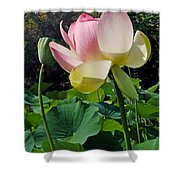 Lotus Lily Standing Tall Shower Curtain