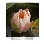 Lotus Opening 2804 Shower Curtain