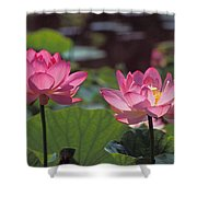 Lotus Pair 24m Shower Curtain