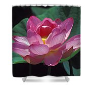 Lotus--secrets Within 24k Shower Curtain