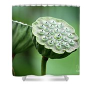 Lotus Seed Pods Shower Curtain
