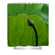 Lotus-sheltering The Future Dl032 Shower Curtain
