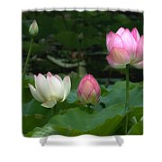 Lotus--stages Of Life II Dl024 Shower Curtain