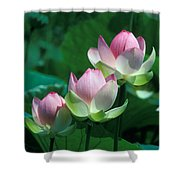 Lotus--stepping Stones 24p Shower Curtain