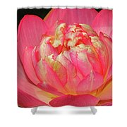 Lotus Unfolding Shower Curtain