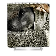 Lounging Shower Curtain