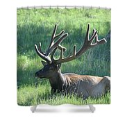 Lounging Elk Shower Curtain