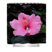 Lounging In A Hibiscus Shower Curtain by Renee Trenholm