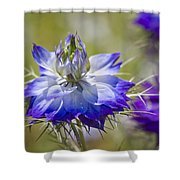 Love In The Mist - Nigella Shower Curtain
