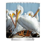 Love Is In The Air... Shower Curtain
