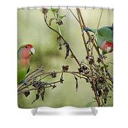 Lovebirds At Play  Shower Curtain