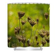 Loveliness In Death Shower Curtain