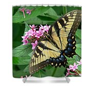 Lovely Butterfly Shower Curtain