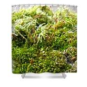 Lovely Green Lichen Shower Curtain