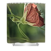 Lovely Lady Shower Curtain