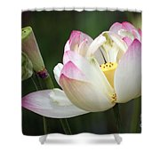 Lovely Lotus Shower Curtain by Living Color Photography Lorraine Lynch