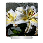 Lovely Sunlit Lily Shower Curtain
