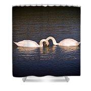 Loving Swans Shower Curtain