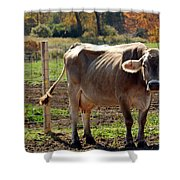 Low Cow Shower Curtain