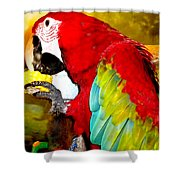 Lucky Look Joy Shower Curtain